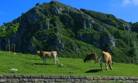 El turismo rural en Asturias desciende un 33% en marzo