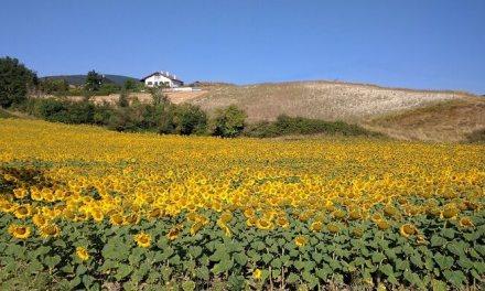 El turismo rural aumenta un 8% en junio