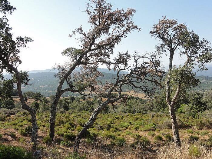 Desciende el turismo rural en Los Alcornocales en noviembre