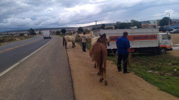Photo of Operação captura 21 cavalos na região da Lagoa das Bateias