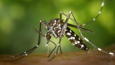 Photo of Secretaria de saúde registra mais de 4 mil casos de dengue em Conquista