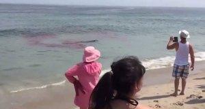 tiburon-ataca-dos-personas-en-ny