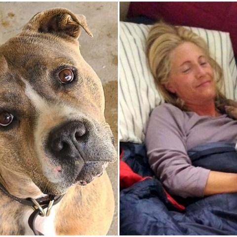 perros, adopción, Colorado, refugio de animales, Facebook