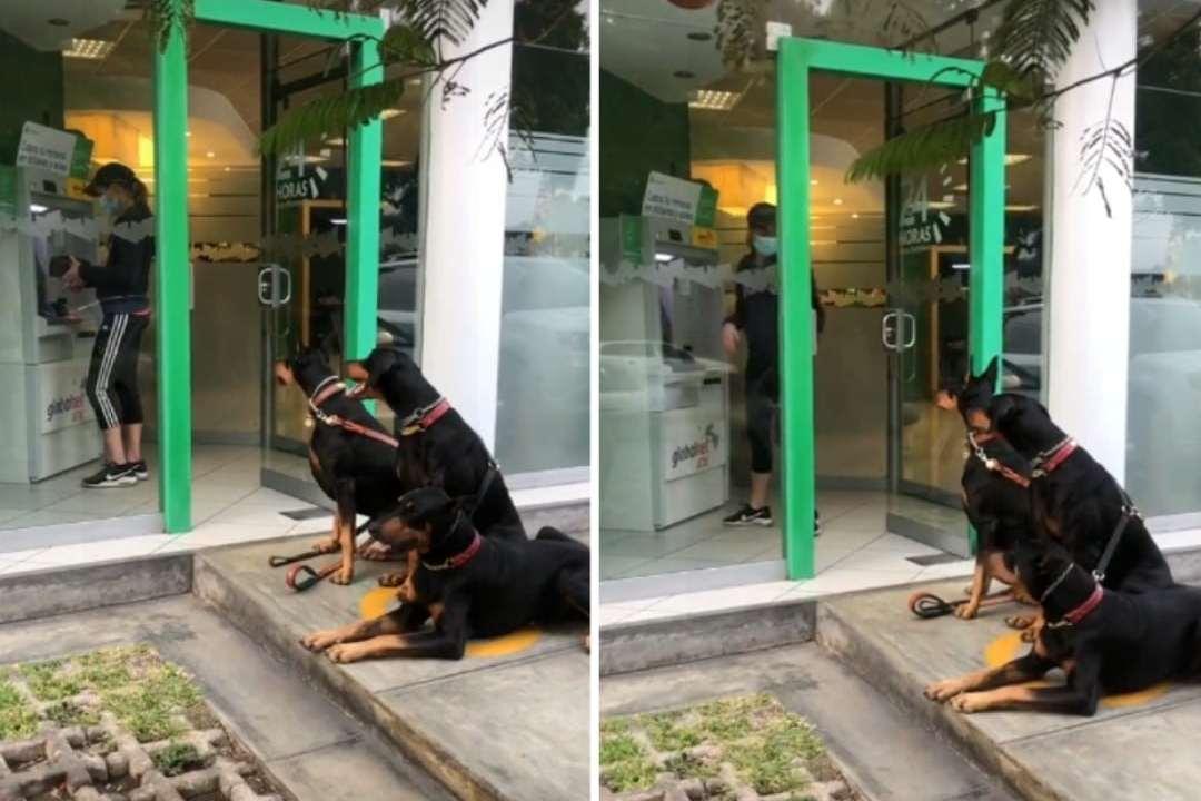 Mujer se vuelve viral por acudir al cajero con sus tres perros dóberman: Video