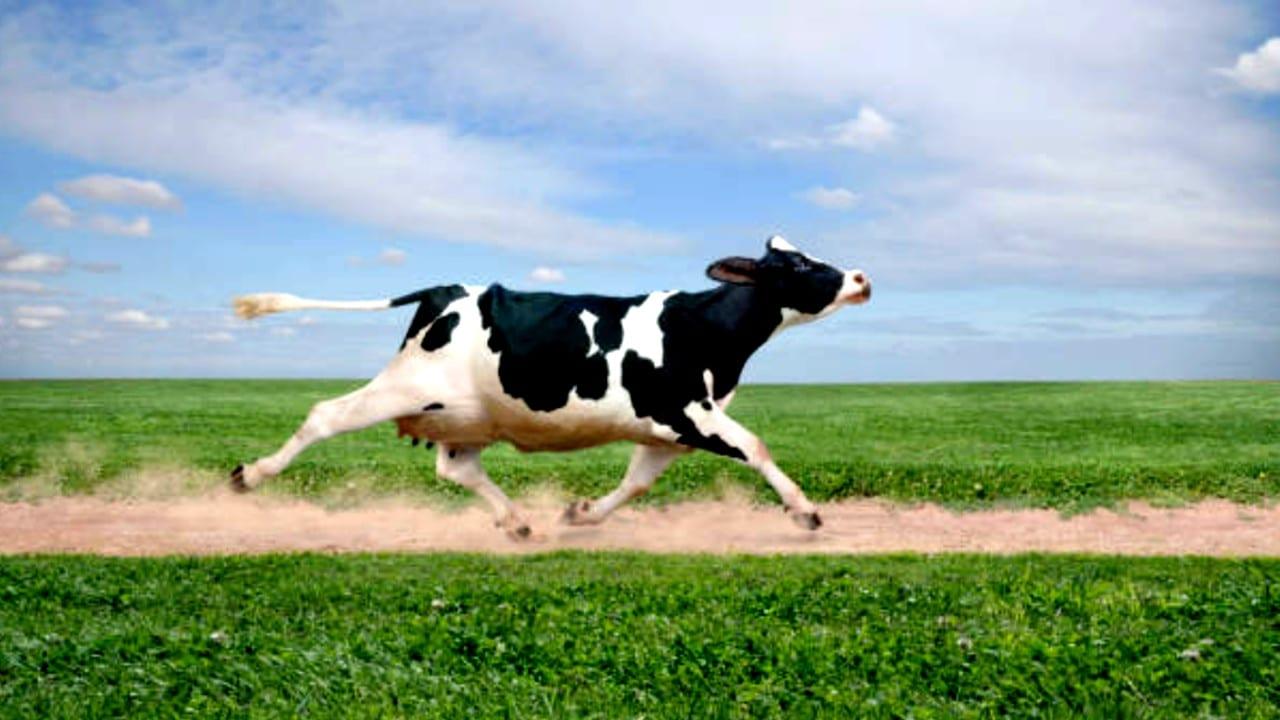 Nueva Zelanda anuncia misión de control espacial para rastrear eructos de vacas
