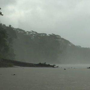 VIDEO: Viaje por el bosque de lluvias, Parque Nacional del Manu