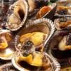 Prohibido capturar (y comer) conchas negras en el Perú hasta el 31 de marzo