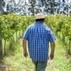 Enoturismo: 3 bodegas para degustar el mejor vino en Uruguay