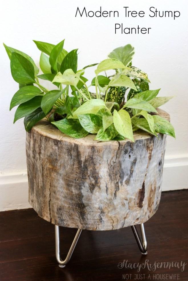 small indoor plants, best indoor plants, tree stump planter