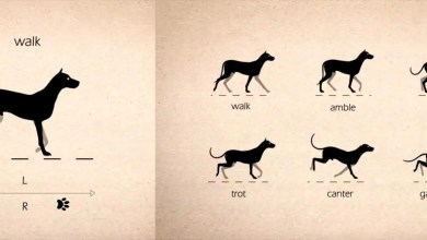 Tutorial de Animación de cuadrúpedos Caminatas 2D