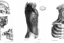 Photo of 7 Libros de Anatomía Humana y Animal para artistas PDF  ⭐⭐⭐⭐⭐