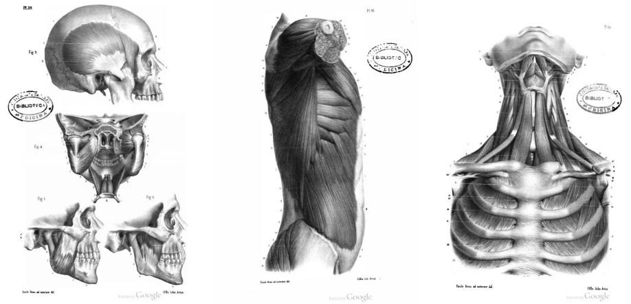 ▷ 7 Libros de Anatomia Humana y Animal para Artistas - PDF (2018)