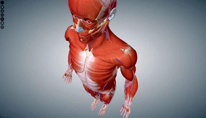 anatomia para escultores online