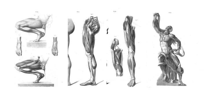 anatomía para artistas pdf