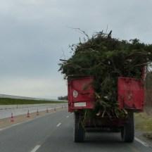 Ile de Ré - Collecte sapins de Noël - janvier 2017