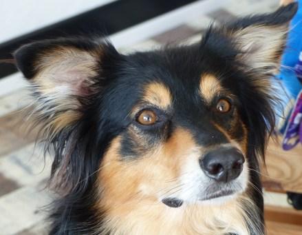 Fletcher, chien de Virginie Gaillot - 31 mai 2017