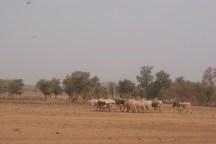 Champ au Burkina Faso