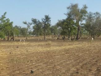 Brousse à Ramessoum, Burkina Faso
