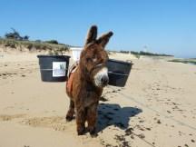 Galopin à la plage