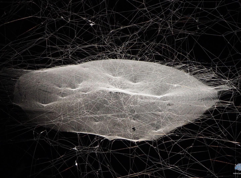 Trouvez l'araignée en vous à l'exposition Carte Blanche de Tomás Saraceno au Palais de Tokyo