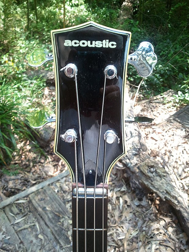1973 Acoustic Control Corporation Black Widow Bass - headstock