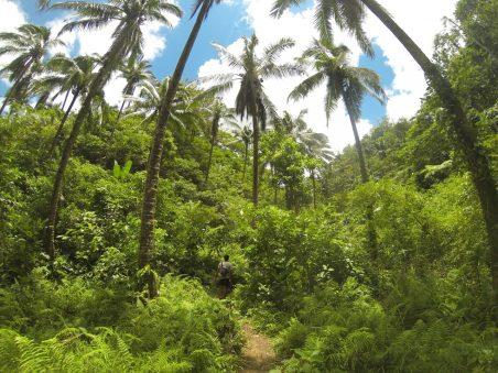 Dans la jungle