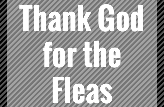 Thank God for the Fleas:Remaining thankful in the midst of diversity