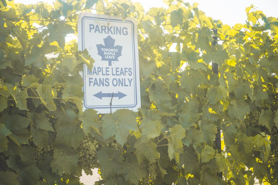 Niagara-on-the-Lake Winery Reif Estate Winery