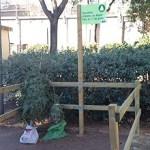 L'hora de reciclar l'arbre de Nadal