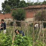 L'hort comunitari de Can Valent vol recuperar el passat agrícola de Porta