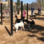 L'Ajuntament retirarà els pals d'agilitat de l'àrea d'esbarjo de gossos per les queixes dels usuaris