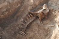 Esqueleto de un equino, aunque se desconoce su antigüedad.