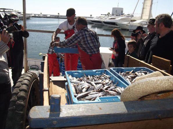 Gerrets recién pescados, tras su llegada al puerto de Santa Eulària.