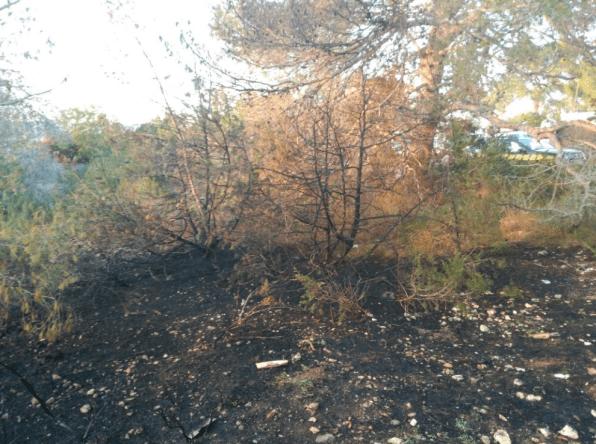 La zona de sa Serra afectada por el fuego. Foto: Ibanat