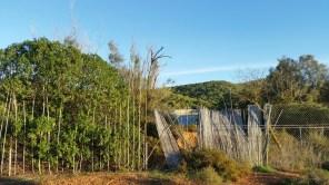 Imagen del exterior de lo que fue un delfinario, en pleno Parc Natural de ses Salines. Foto:V.R.