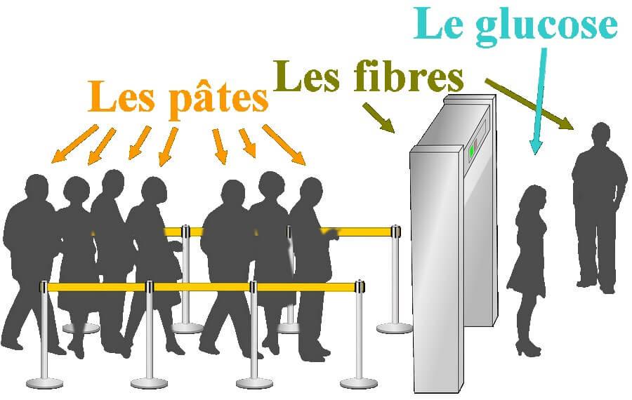 Schéma qui montre l'effet des fibres solubles