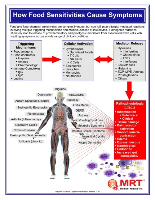 how-food-sensitivities-cause-symptoms_nourzibdeh_image