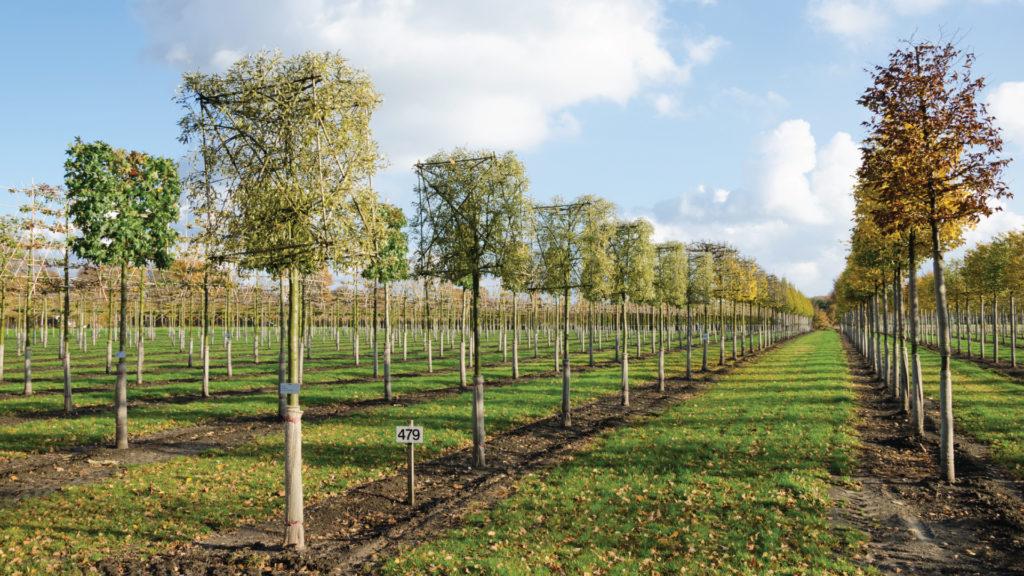 Nova Flore Champigné Les Hauts d'Anjou Solutions Naturelles Gestion Ecologique Economique Plantation