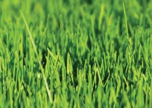 Nova Flore Champigné Les Hauts d'Anjou Solutions Naturelles Gestion Ecologique Sols Sportifs