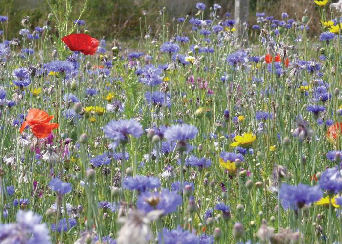 Nova Flore Champigné Les Hauts d'Anjou Solutions Naturelles Préserver Pollinisateurs