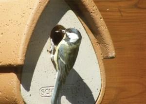 Nova Flore Champigné Les Hauts d'Anjou Solutions Naturelles Protéger les oiseaux