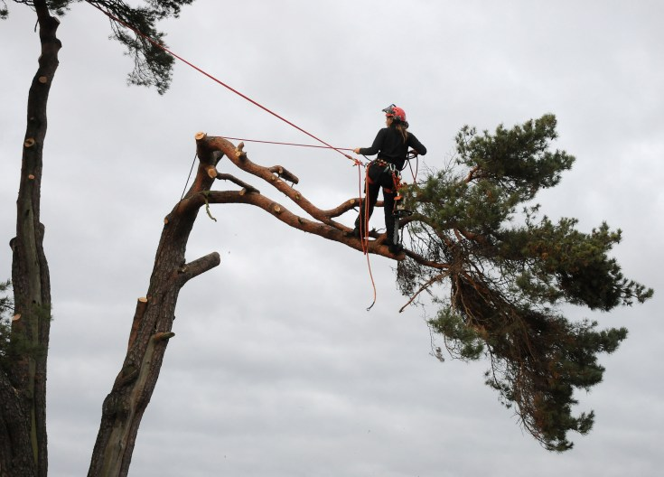 Tree care recommendation Arborist via wikipedia