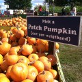 Pick a patch pumpkin at Cox Farms Fall Festival 2012