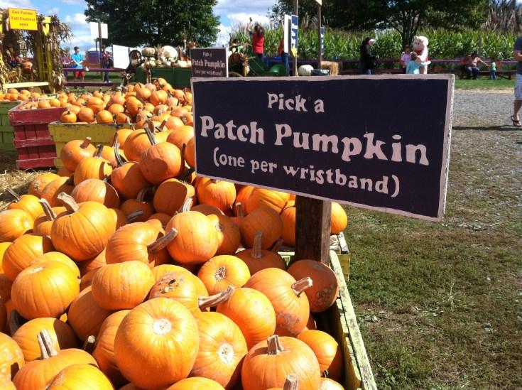 Pick a patch pumpkin at Cox Farms Fall Festival 2012
