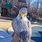 seagull at Chessie's Backyard Playground