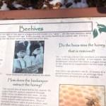 Bee Info Potomac Overlook Regional Park Arlington VA
