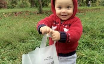 little apple picker at stribling orchard Photo Credit Dana Sasser