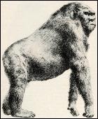 Gigantopithecus blackii