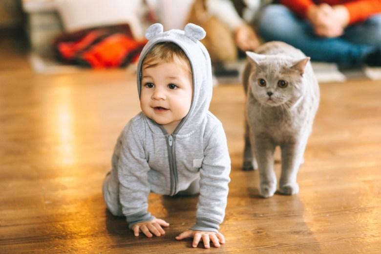 chłopczyk z kotem