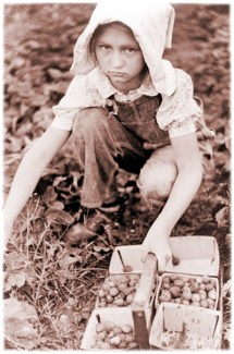 Sarcoxie Missouri - Child Strawberry Pickers Girl - Child Labor